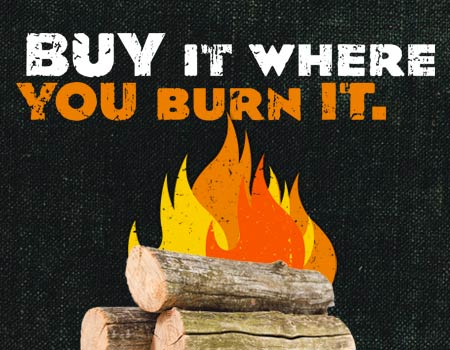 Don't Move Firewood - Learn More >