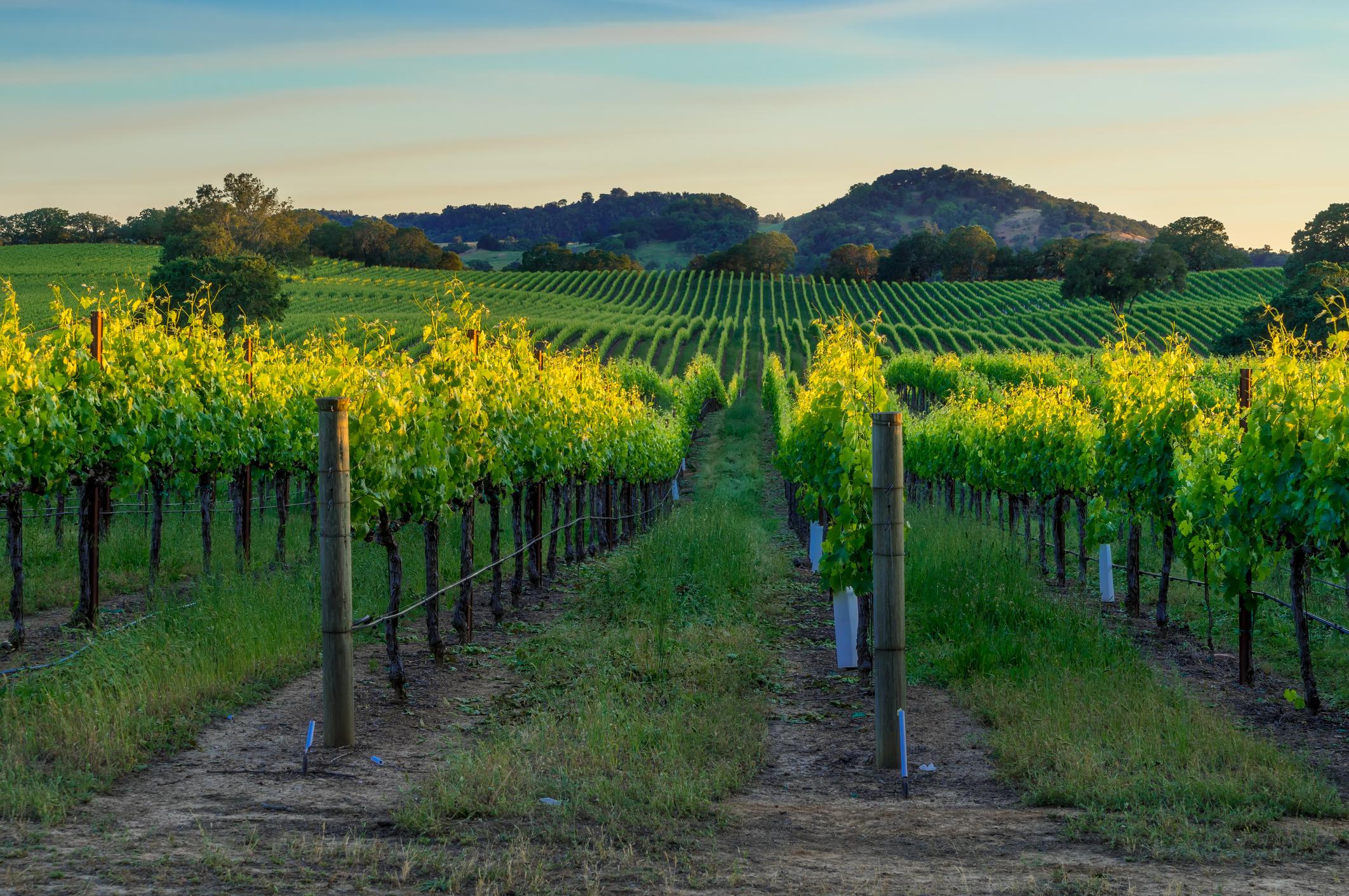 Sonoma County wine update 2018 -