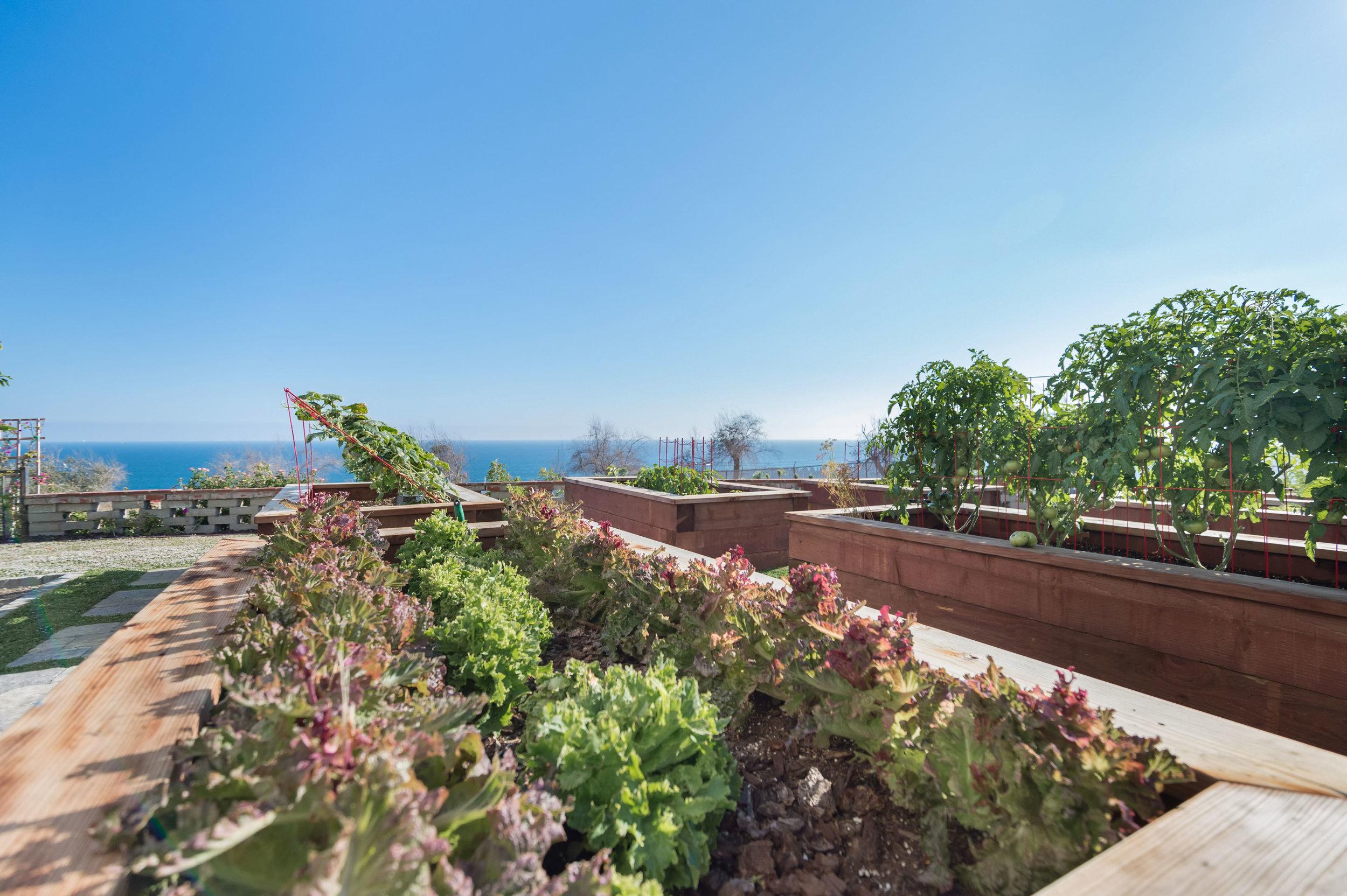 029.2 garden1.jpg