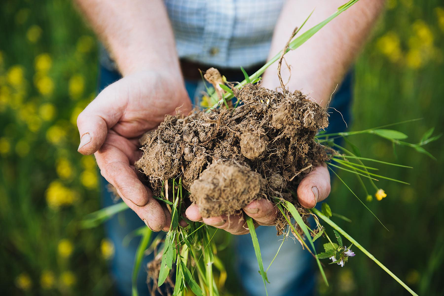 bio-dynamic-farmer-whiskey-barley-02.jpg