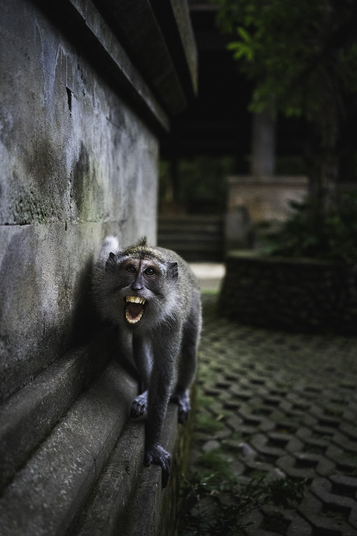 travel-indonesia-ubud-monkey-forest.jpg