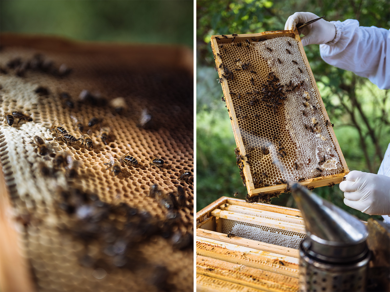 editorial-photography-beekeeping-bees.jpg