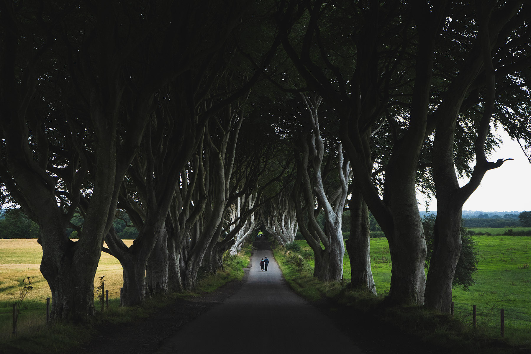 10-travel-ireland-dark-hedges-trees-road.jpg