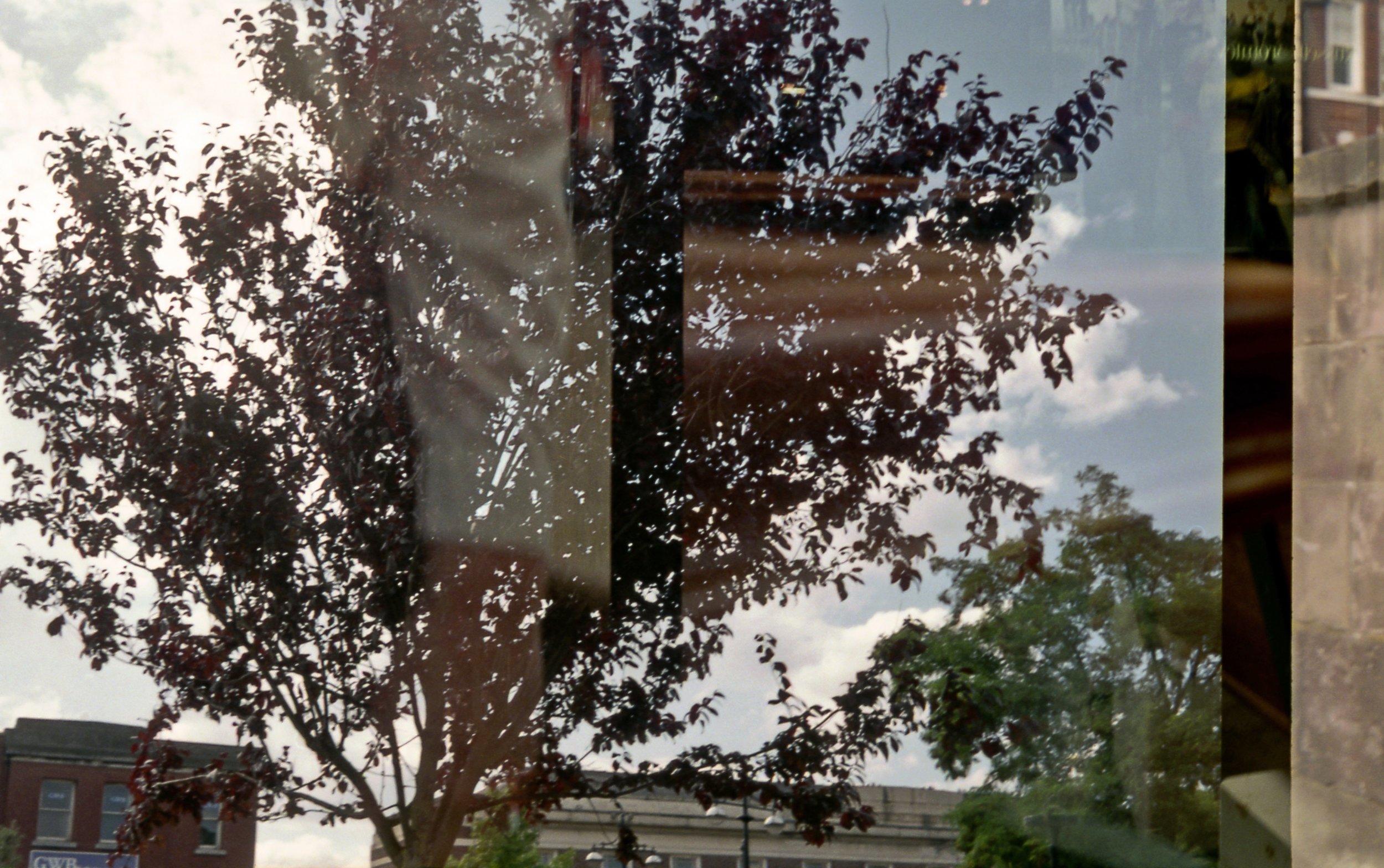 Tree & Arm3.jpg