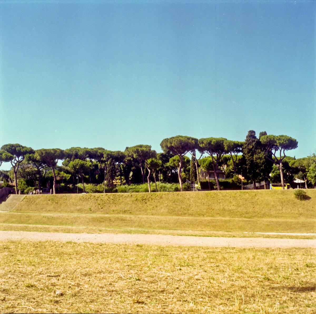 Trees in Rome, Italy - Emma Sywyj.jpg