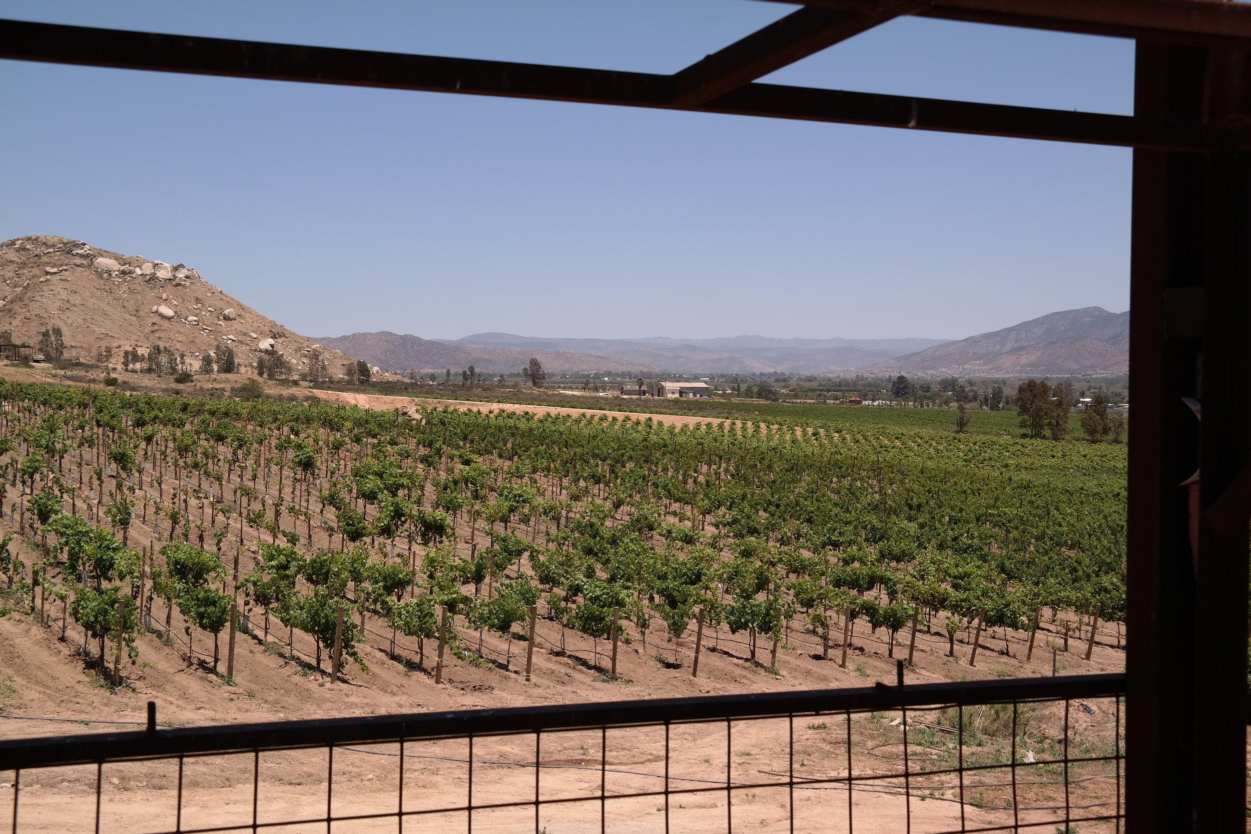 Valle de Guadalupe Ensenada Mexico
