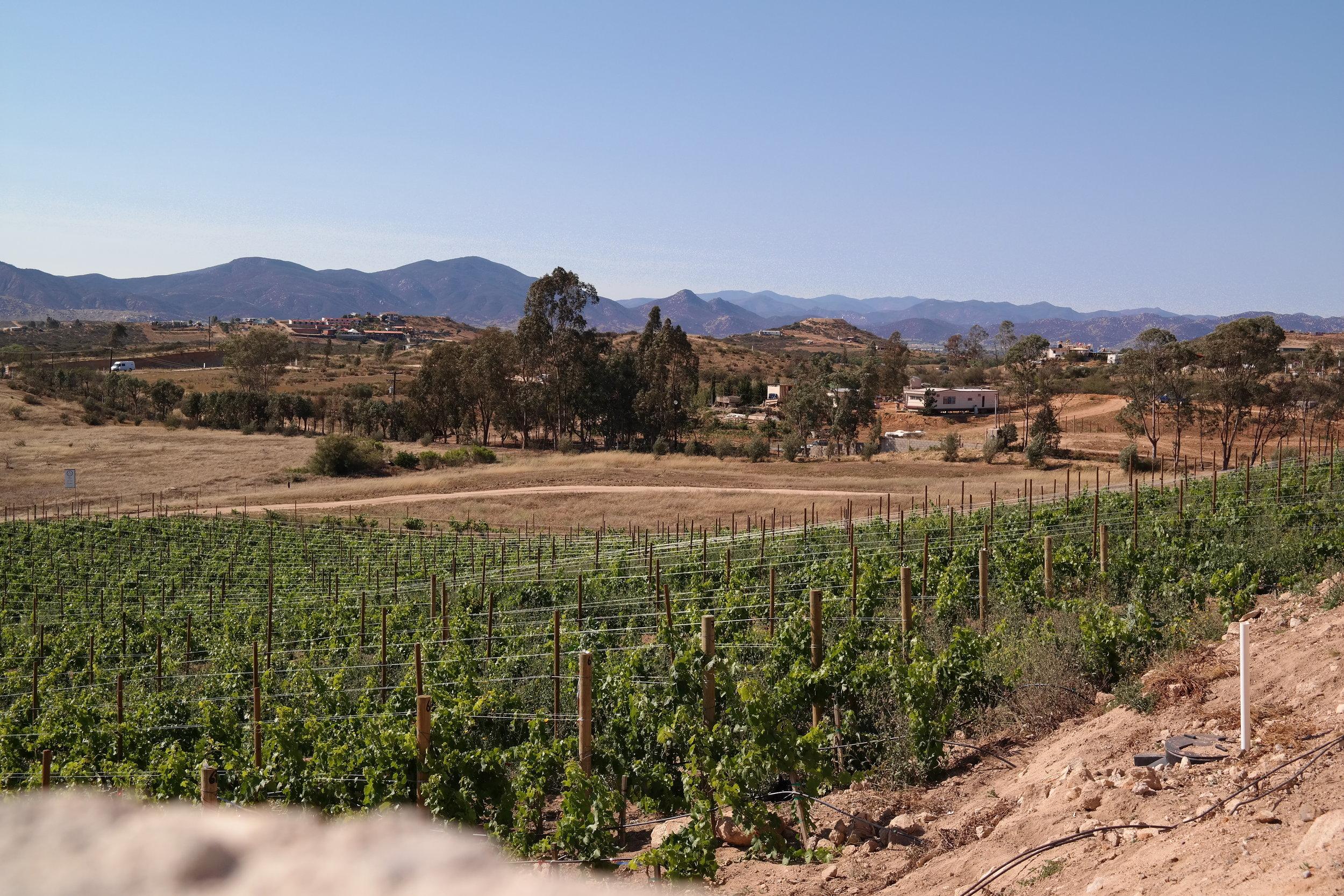 Valle de Guadalupe Ensenada MX