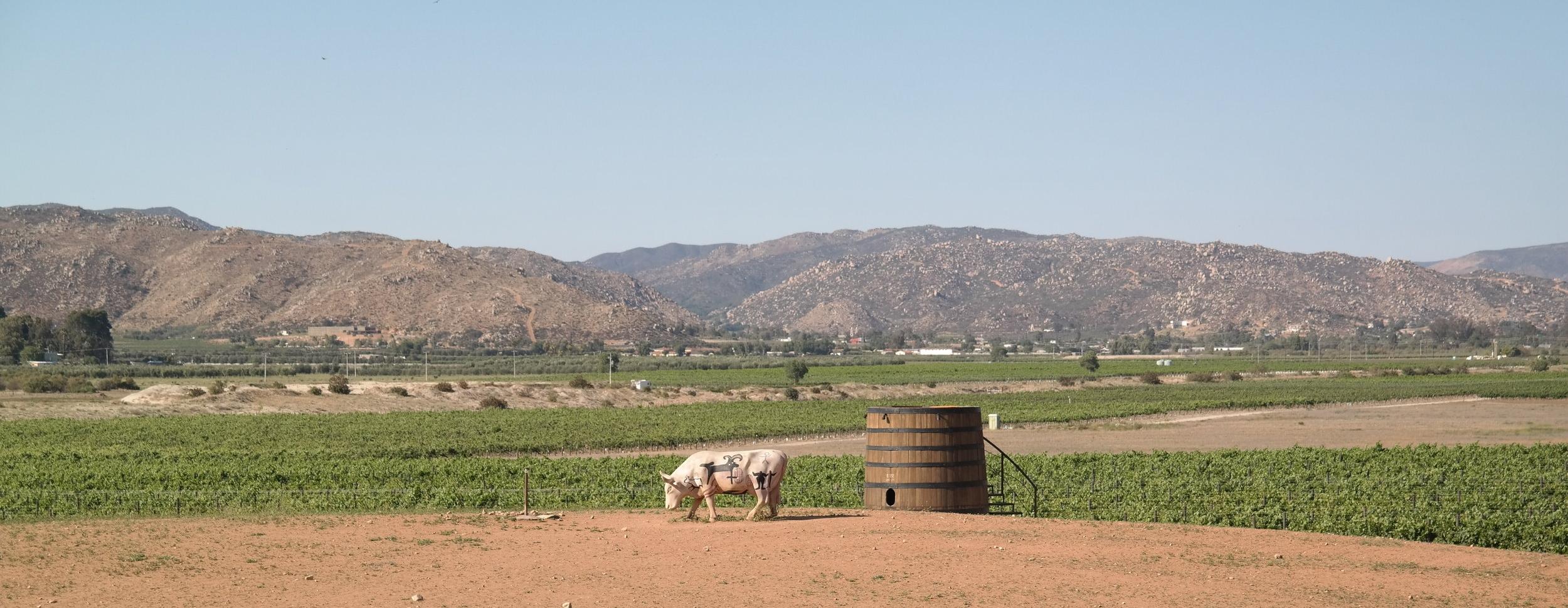 Finca Altozano Farm to table restaurant and Vineyard