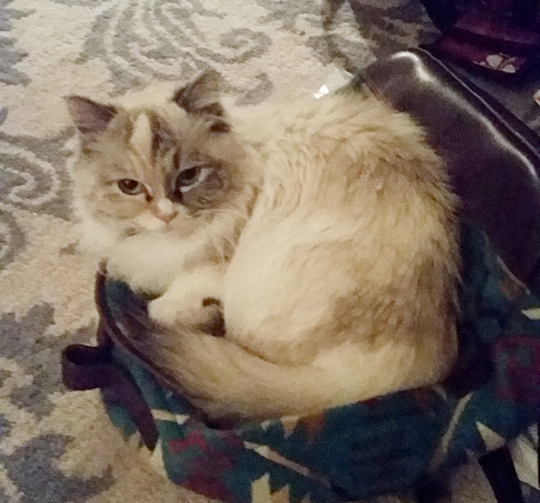@KittenLeia always trying to sneak into my bags to come on my adventures.