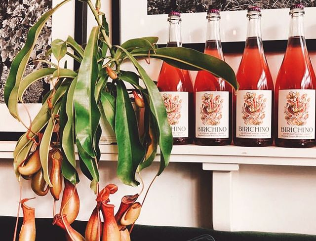 We figured it was the perfect time to share this STUNNING photo from @birichino_official of their newly released 2018 Pétulant Naturel Cinsaut AND a gorgeous pitcher plant from B+L. We just picked up a few of these carnivorous guys yesterday and they look fantastic...and hungry! Come check em out! And while you're downtown, go have a glass of wine at Birchino's tasting room on Church St.! Its tasteful interior ydesign by @stripedesignservices paired with their delicious wine is sure to be a good time! Happy Friday, friends 😊🌿