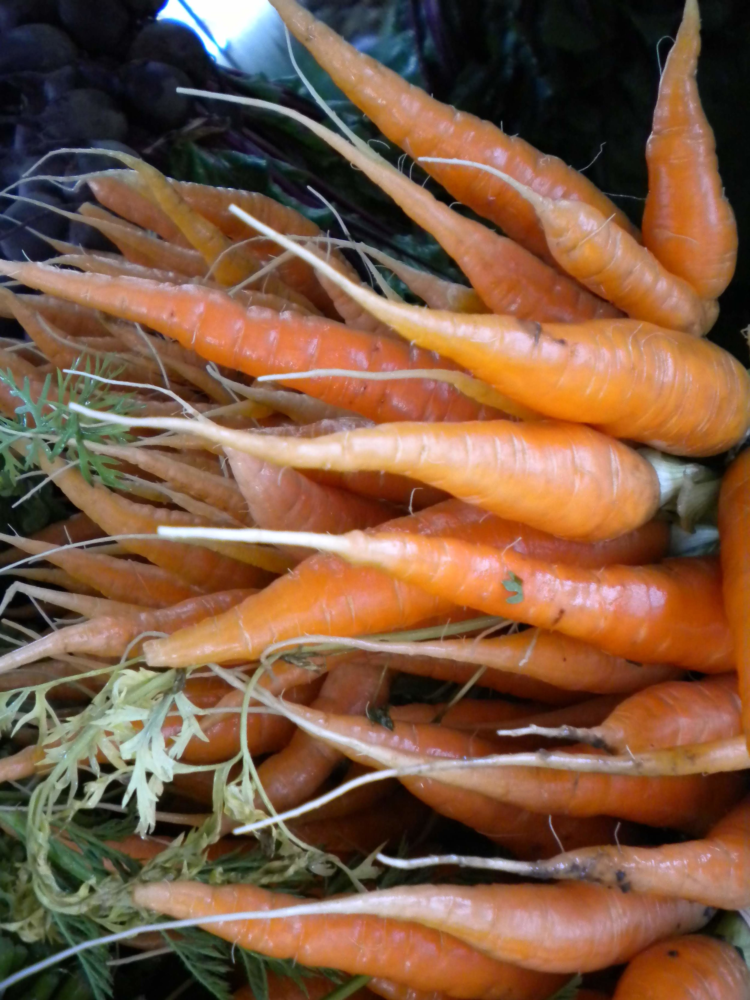 Carrots just picked