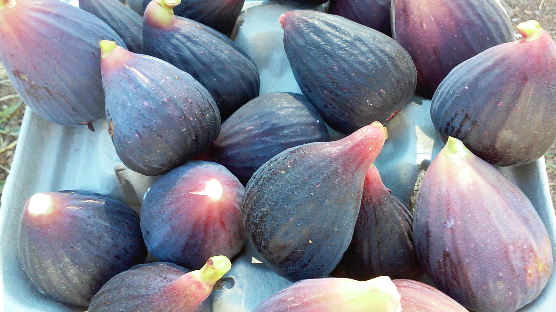 The Perfect Fig