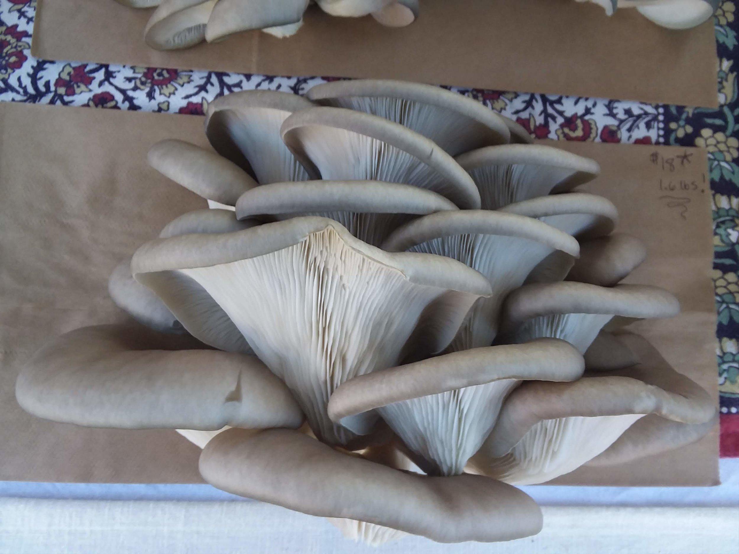produce mushroom farm.jpg