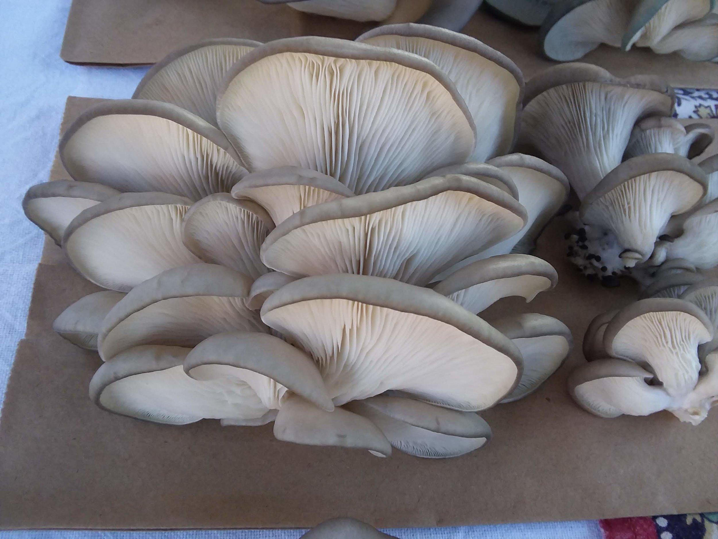 produce mushrooms growing stacked.jpg