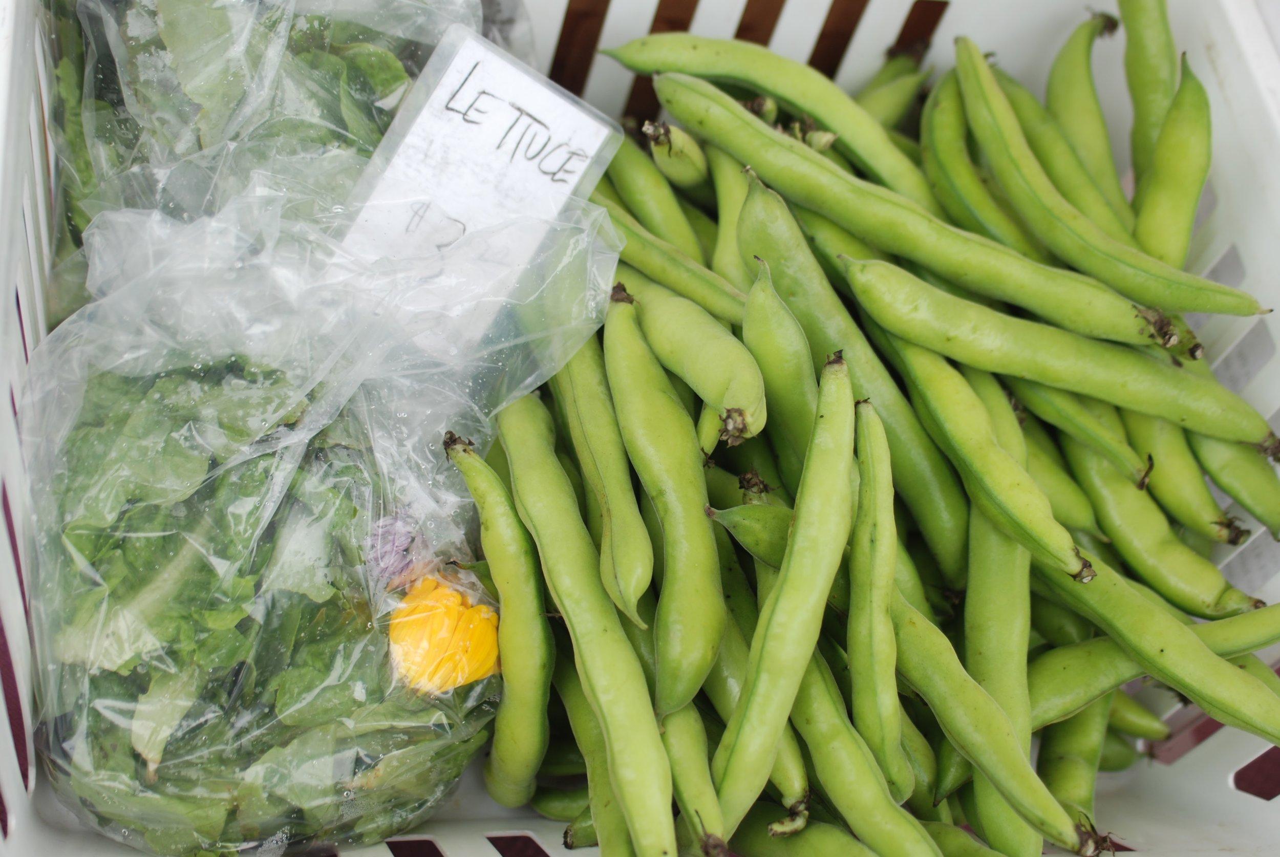 produce peas lettuce.JPG