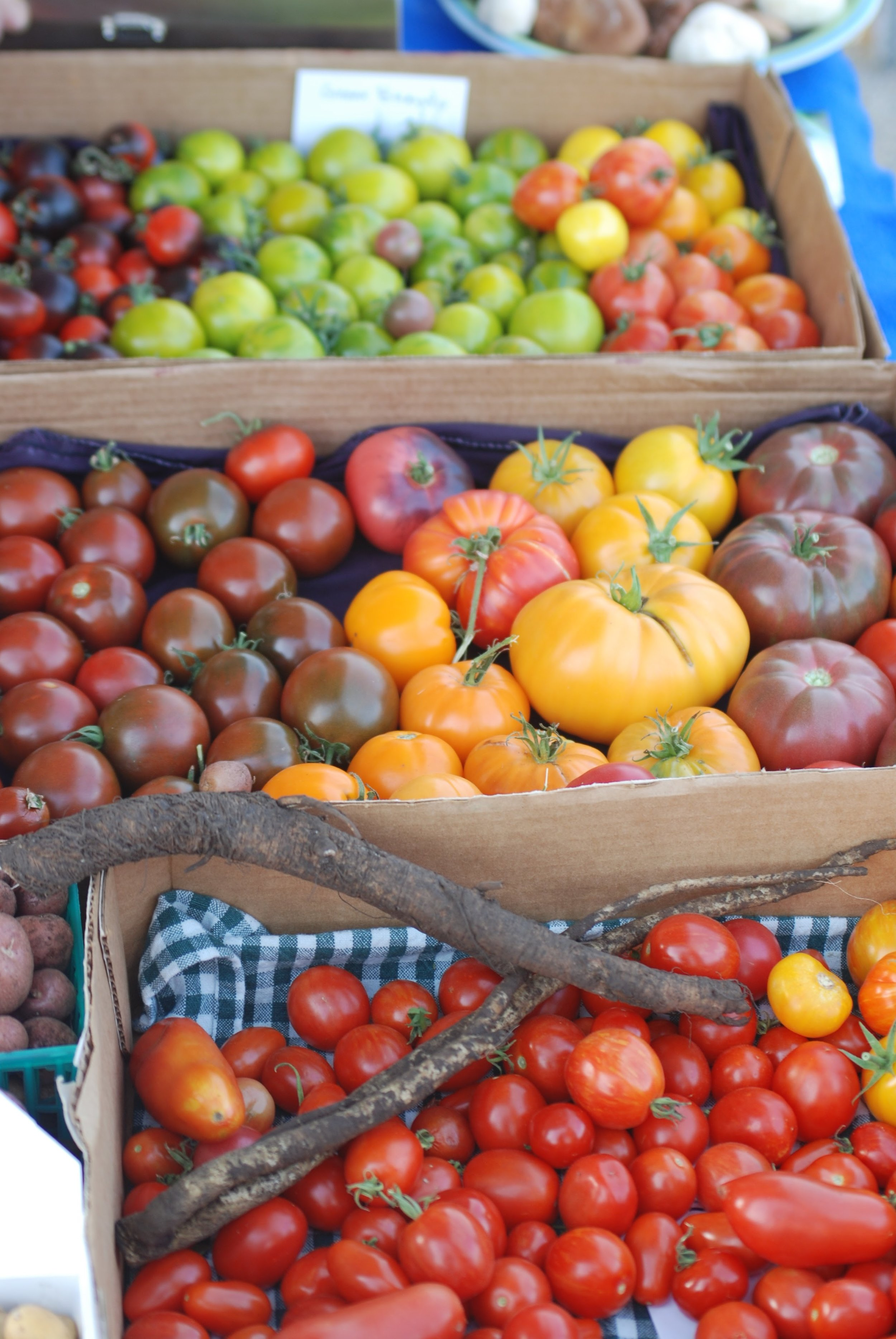 produce tomatoes sorted in boxes 2.JPG