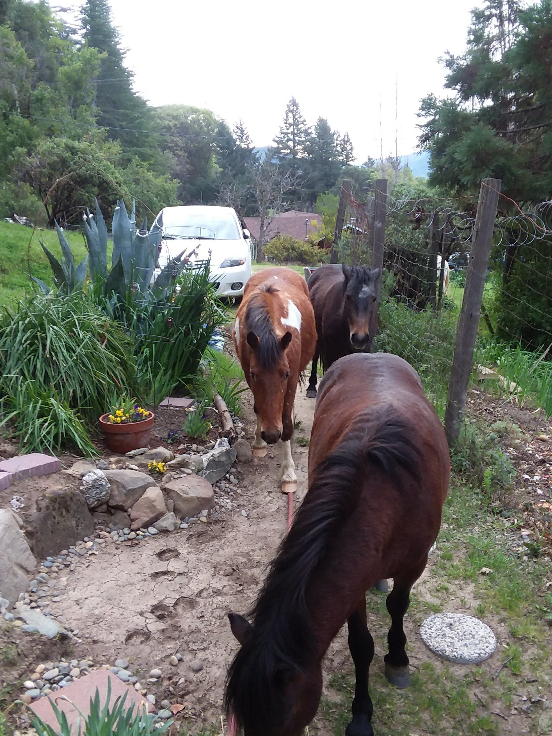 Wild Horses on the Porch