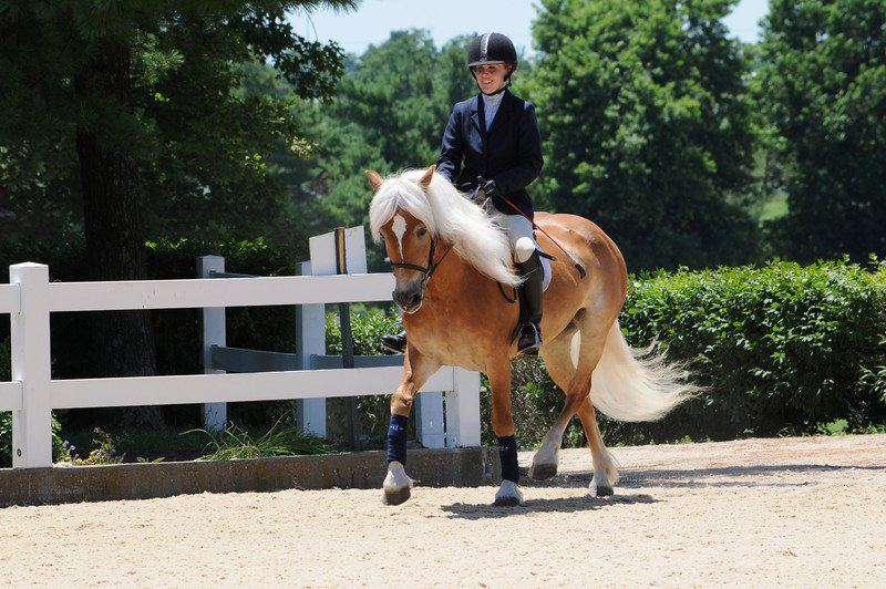 Minute Maid, aka Emma, representing the Haflinger at the Kentucky Horse Park