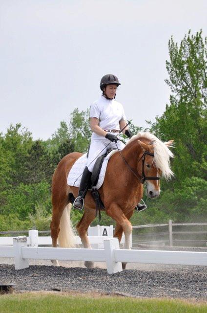 Brenner trot under saddle.jpg