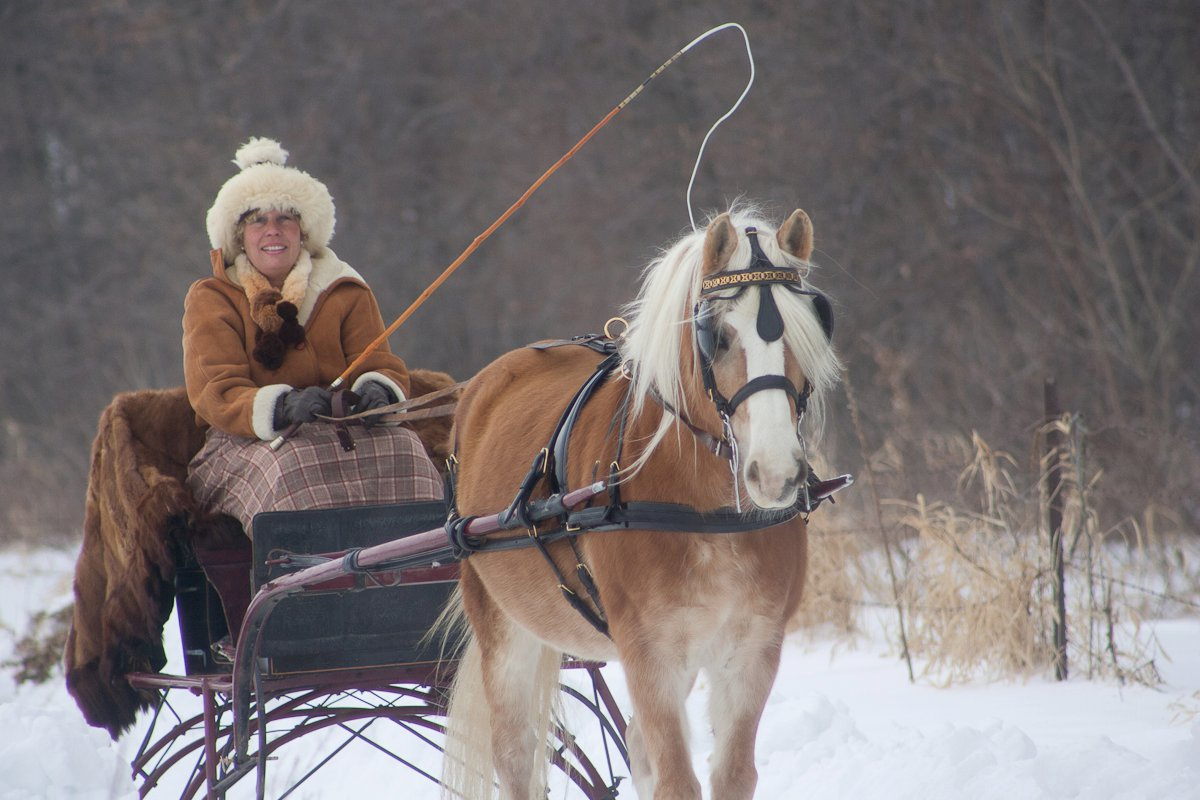 Vanessa, 1998 Haflinger mare, out for a sleigh ride.jpg