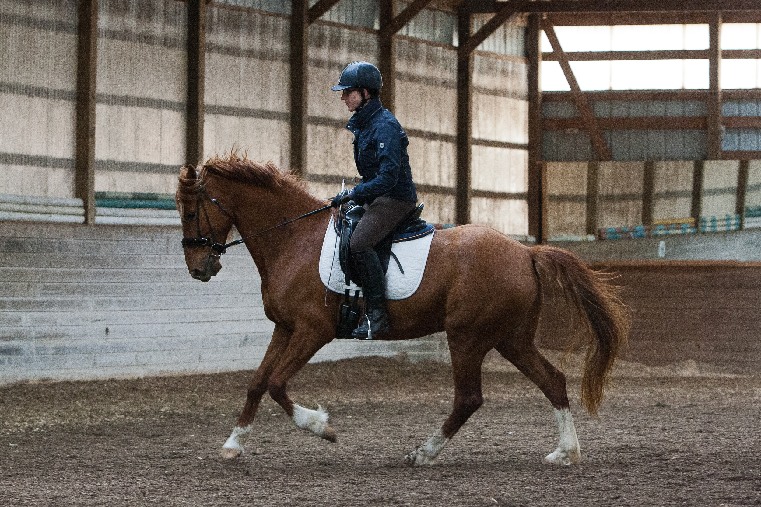 Bella canter two.jpg