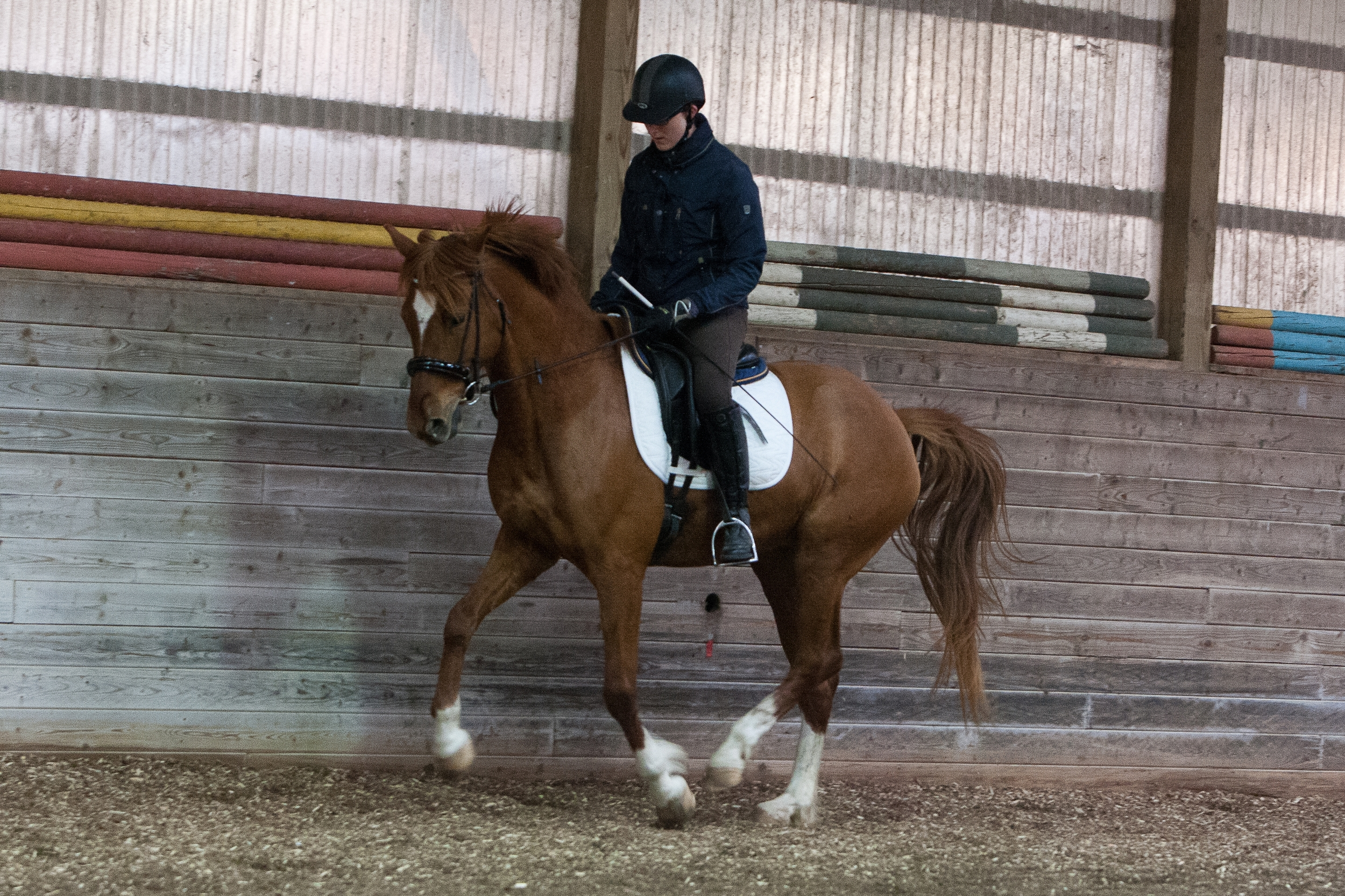 Bella collected canter.jpg