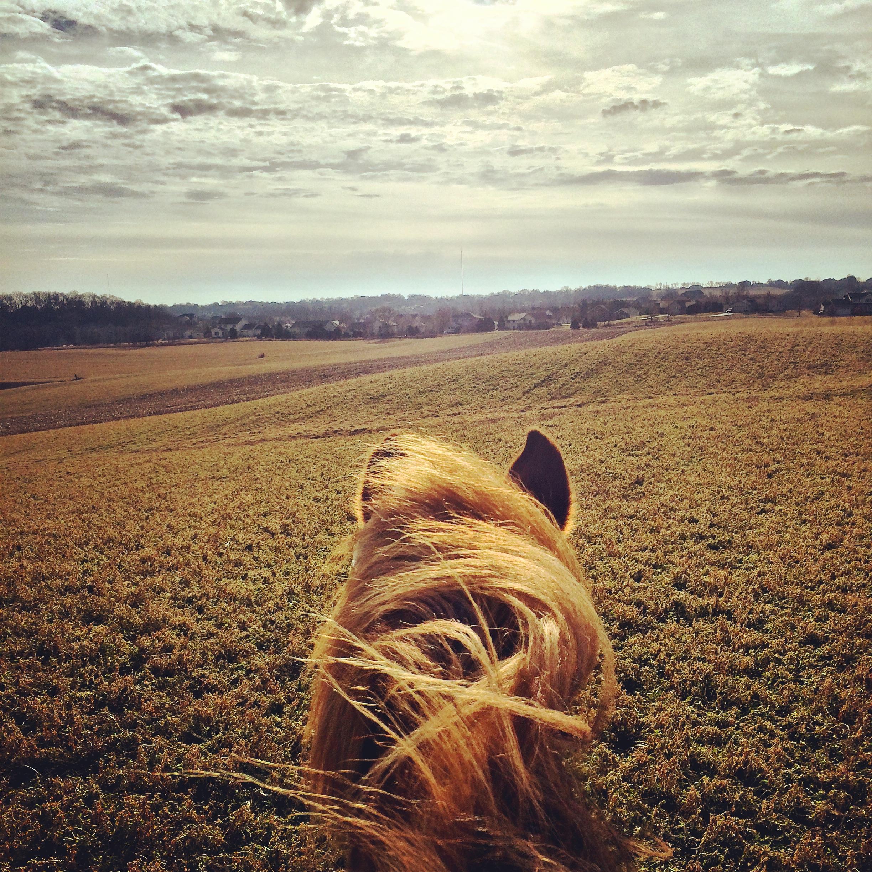 Allie in field.jpg