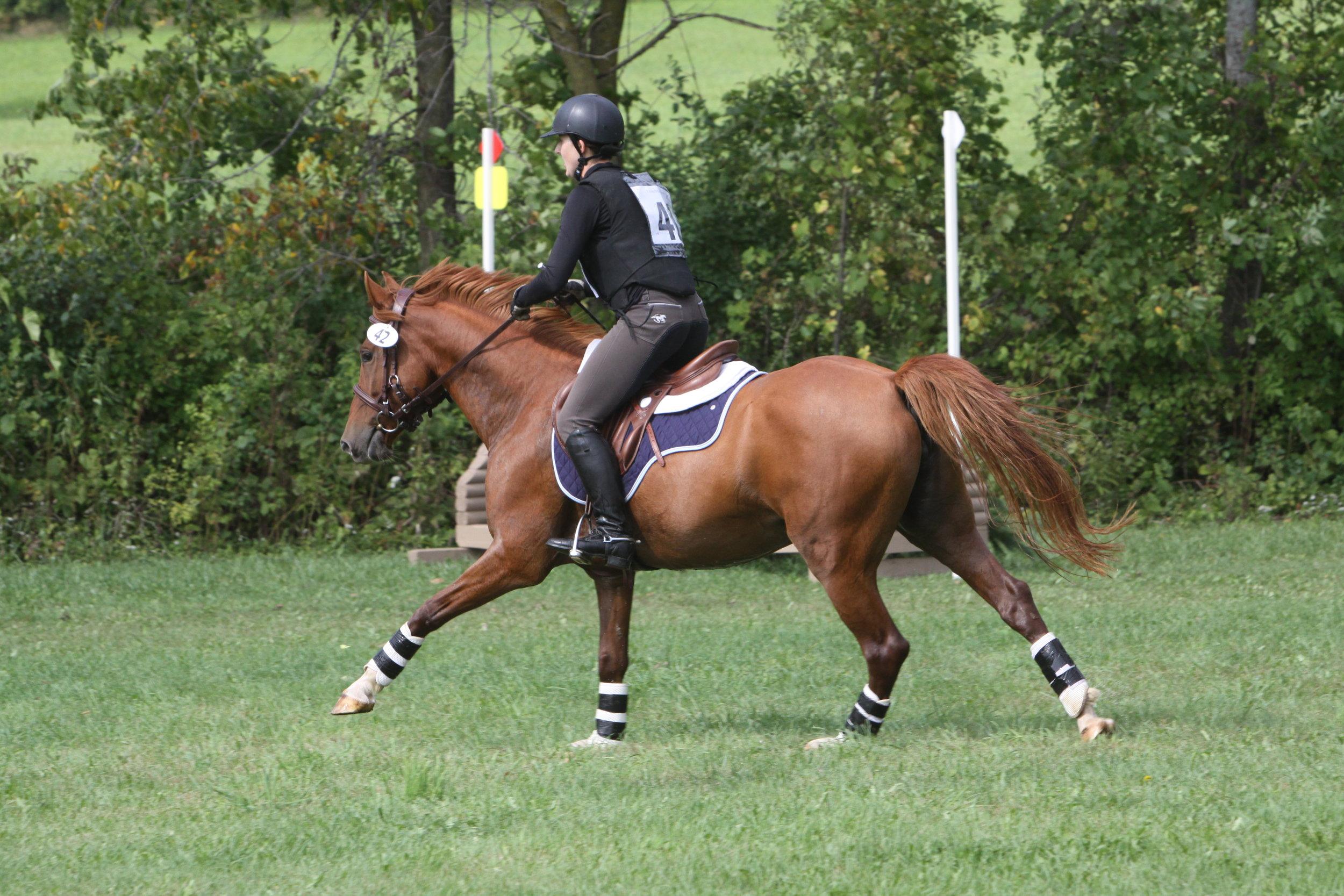 Bella gallop.JPG