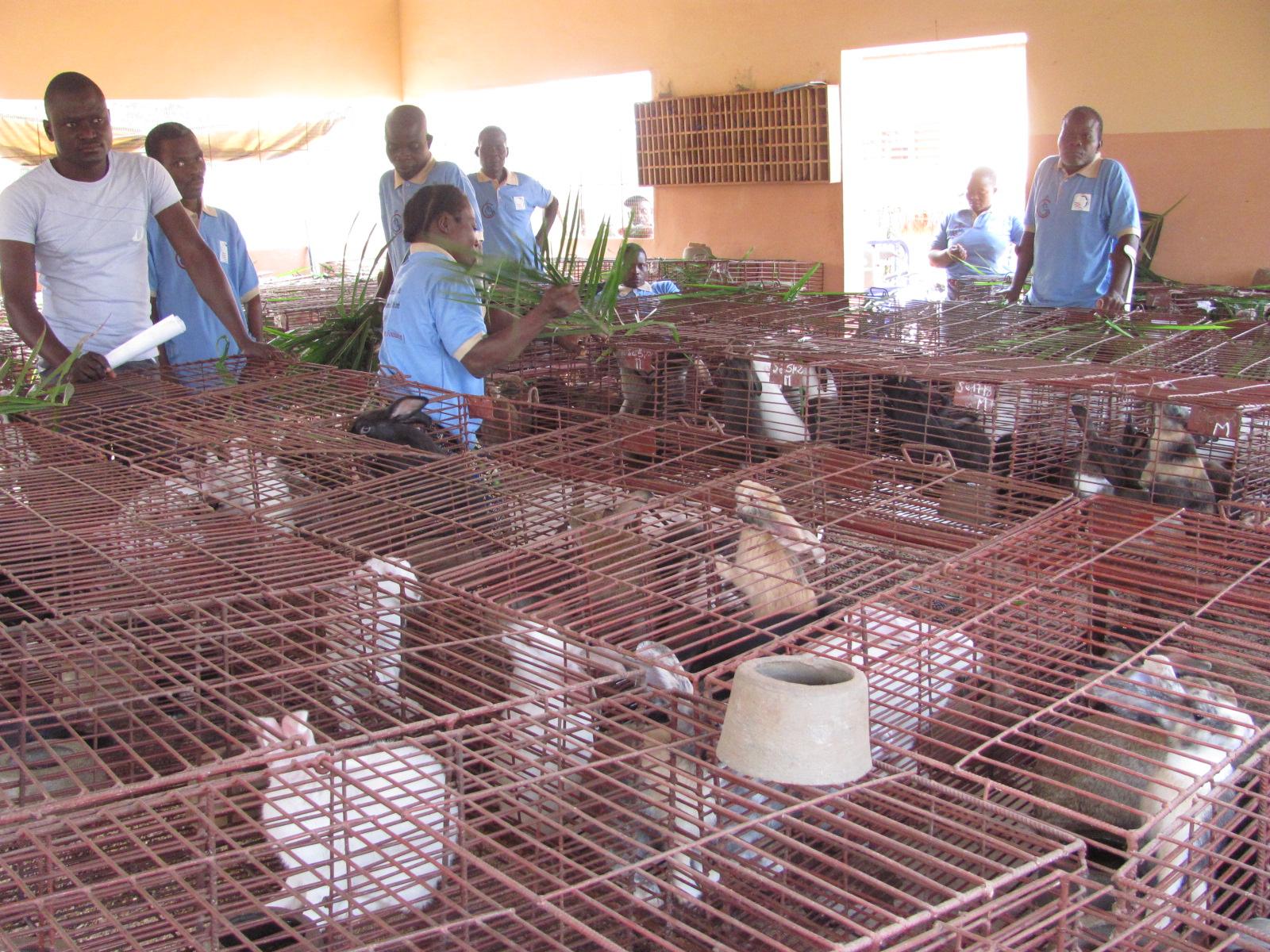 Benin rabbits cages.jpg