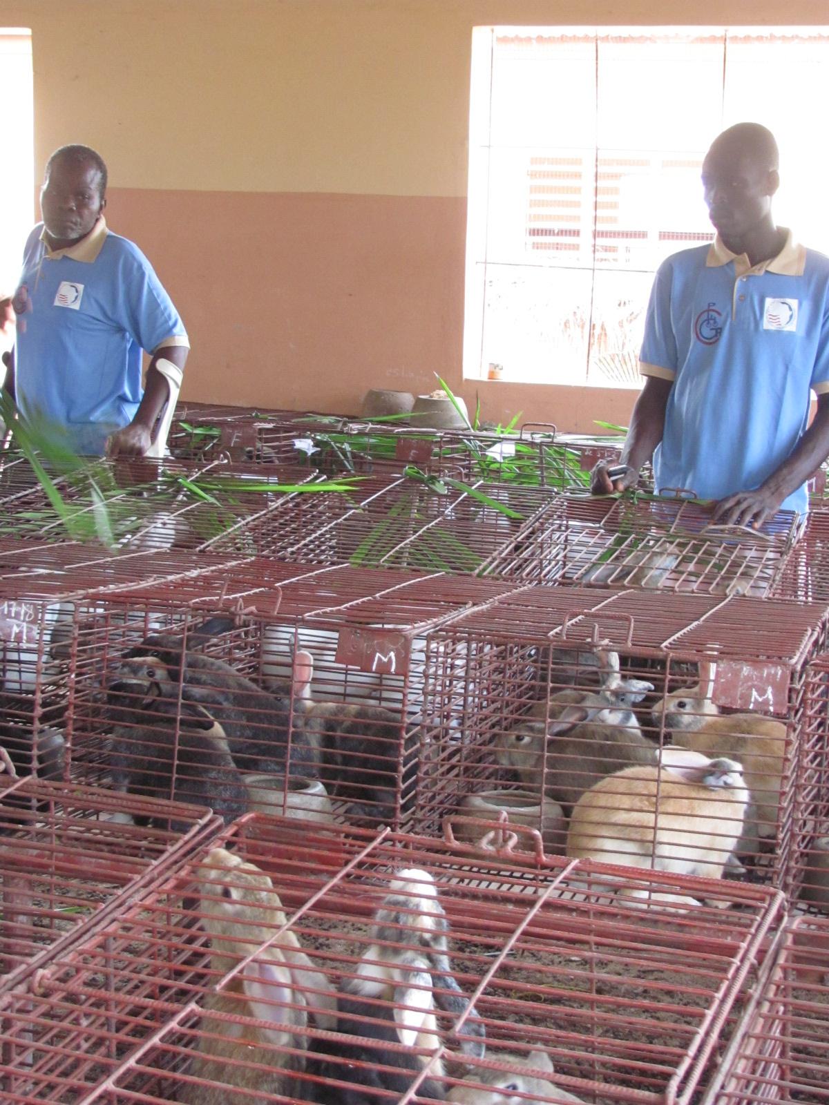 Benin rabbits cages 2.jpg