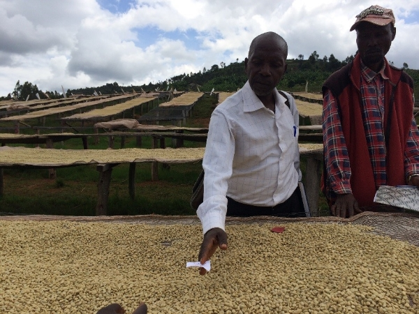 Burundi: members of Kazoza n'ikawa Coffee Cooperative inspect dried coffee