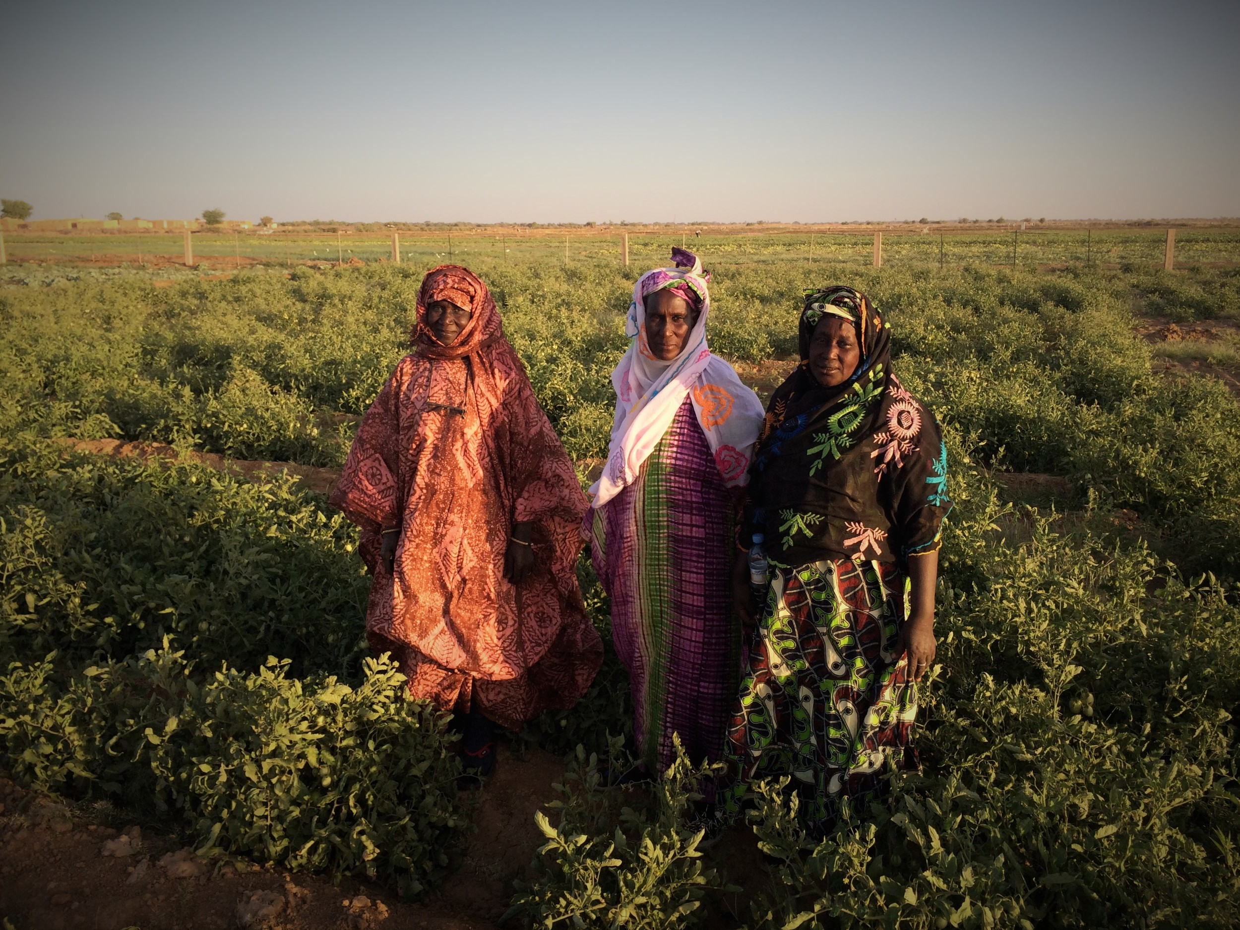 Members of Falo Kone Cooperative, Mauritania