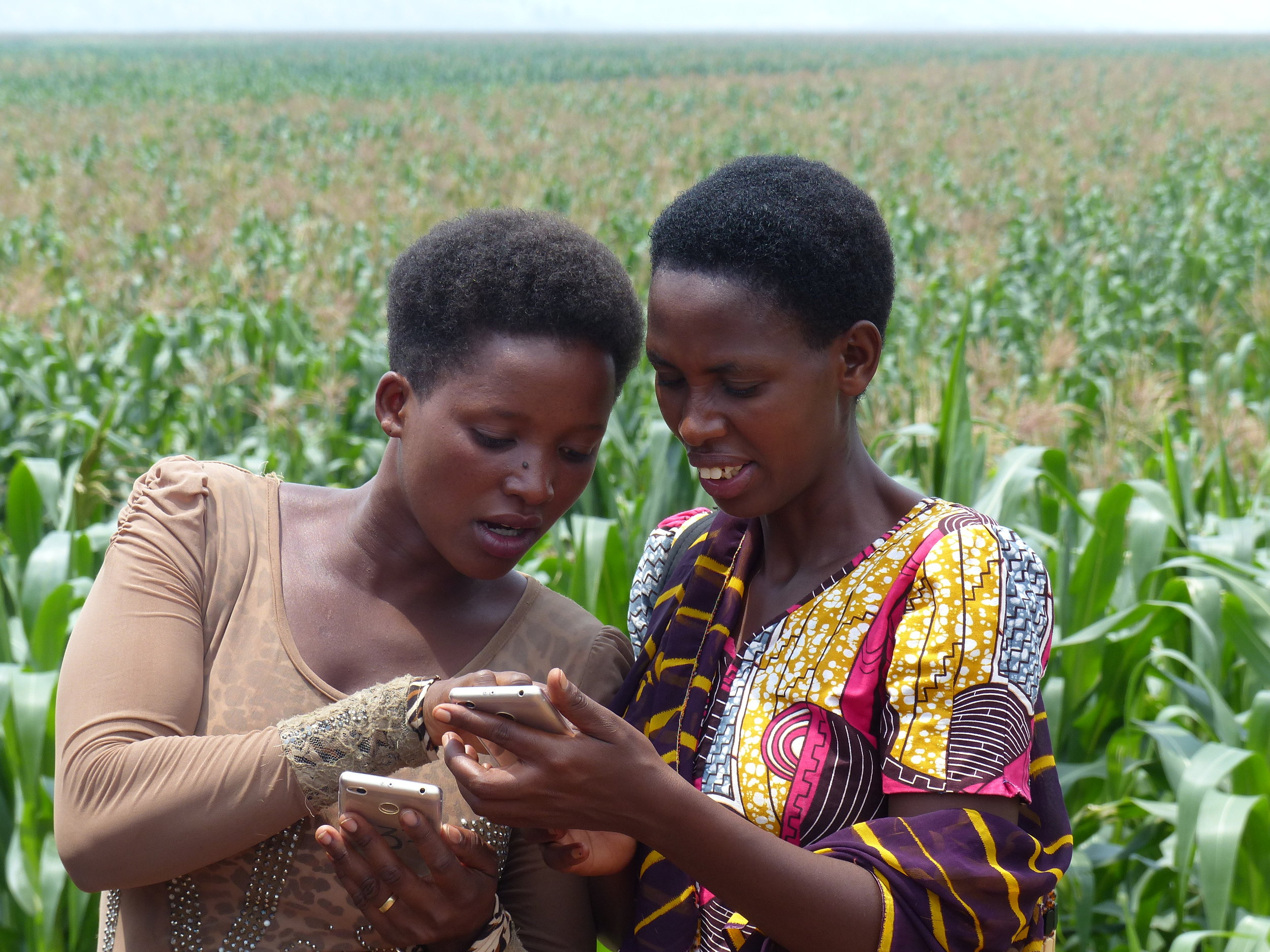 USADF and Milan Innovincy, a private sector partner,are partnering to pilot a digital platform to help the cooperative's farmers to grow healthy crops.