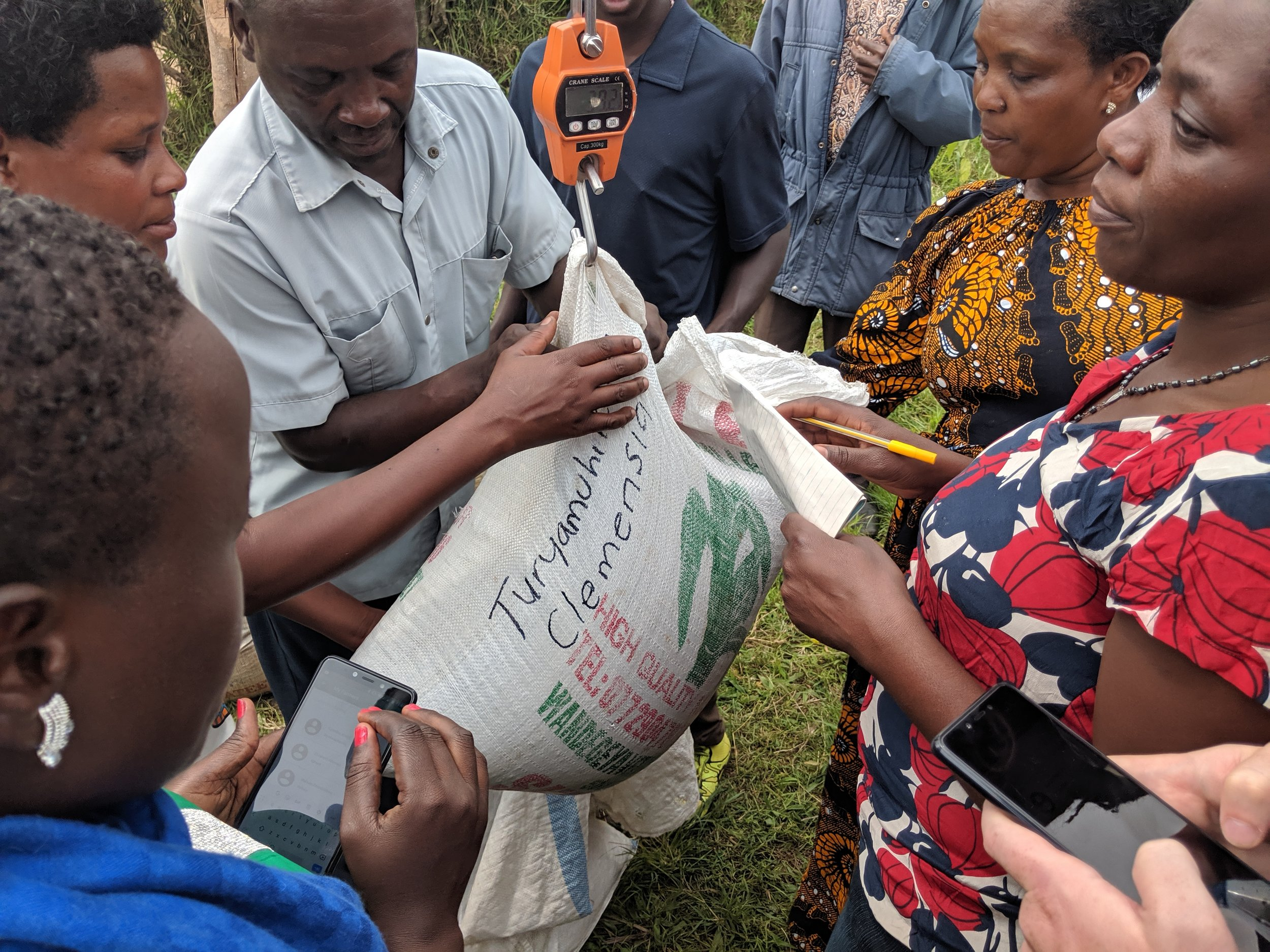 Representing more than 4,800 farmers, 87 percent of which are women, Manyakabi Area Cooperative Enterprise is one of two cooperatives USADF selected in Uganda to begin using the MFN platform, as seen here with the use of smartphones at the crop weighing and reporting process.