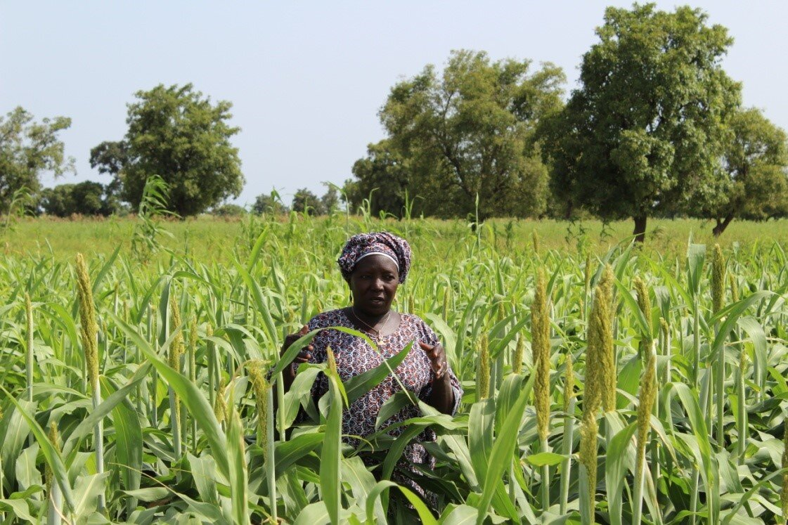 Farming and production of cereal grains, such as sorghum, are important to the food security of communities in rural Mali and to women's incomes.