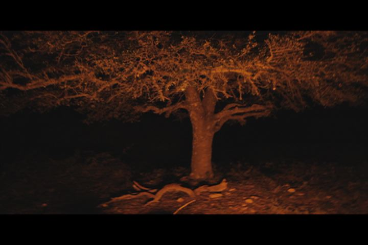 night tree still.jpg