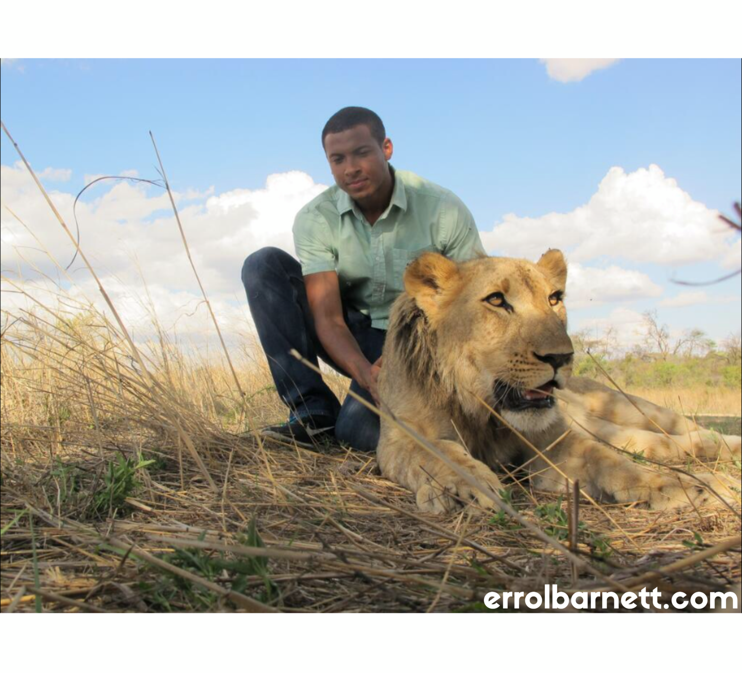 errol + lion