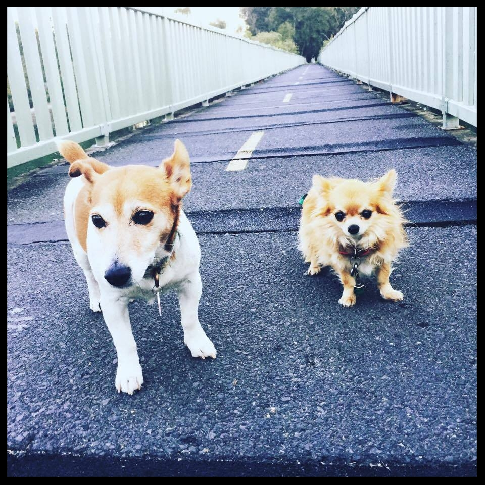 Our two dogs (Cobber and Burrito) will be travelling with us as well.