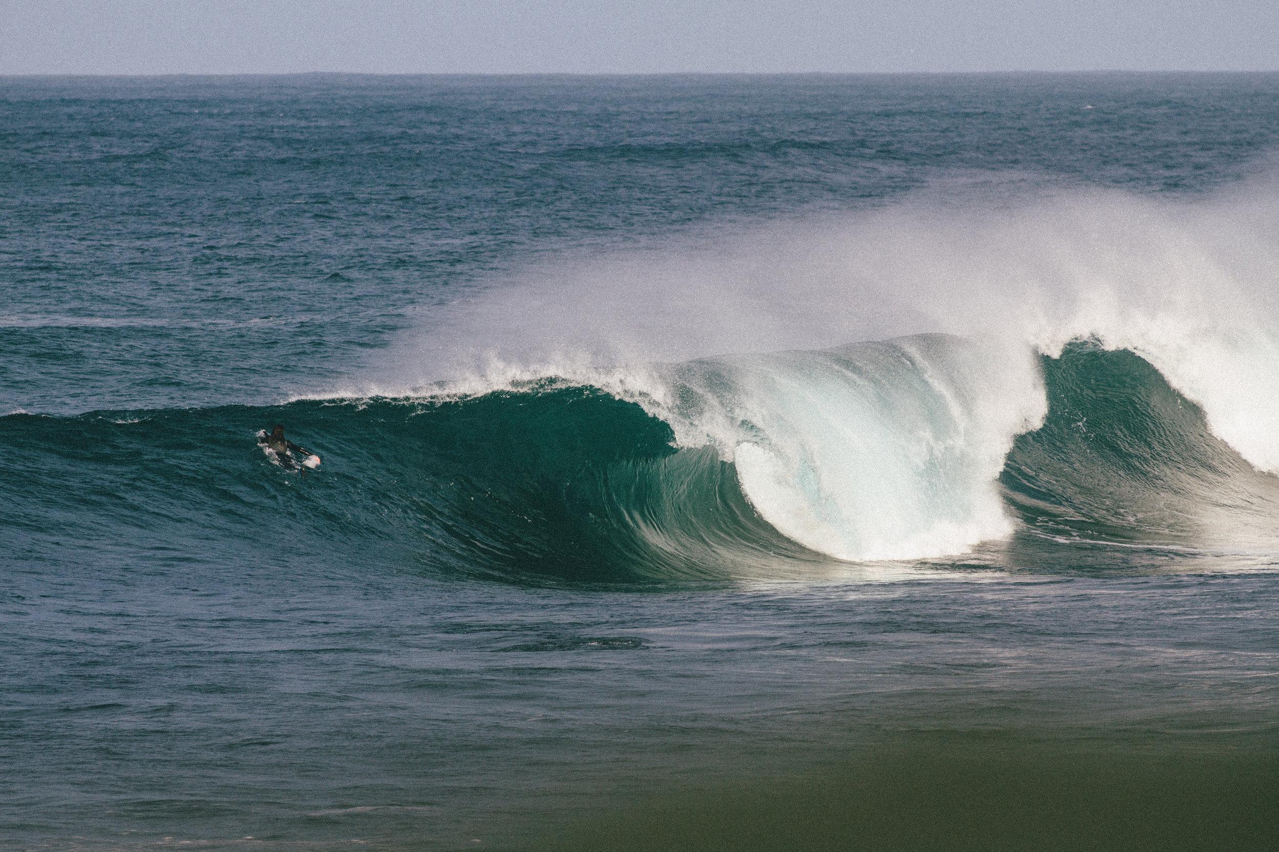 saltwater x vans 4