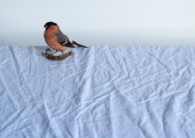 'Solitary bullfinch', Hattie Rutter