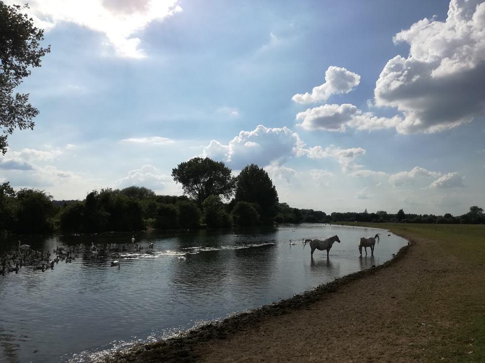 Port Meadow ponies.jpg