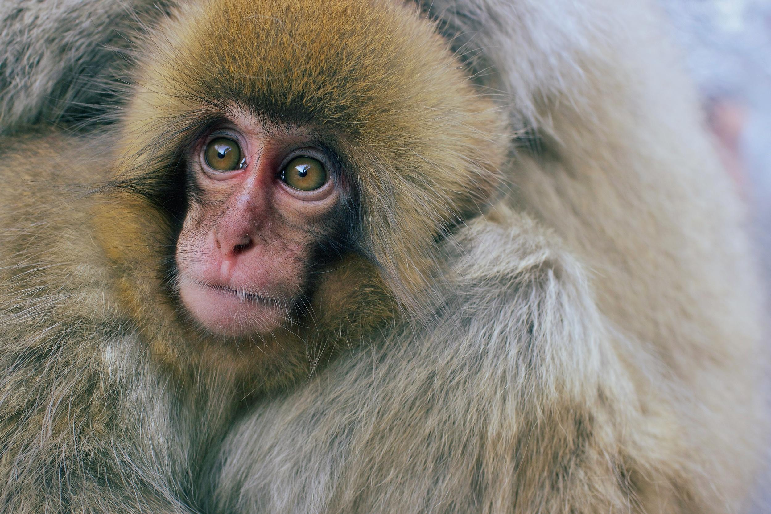 monkey2.jpg