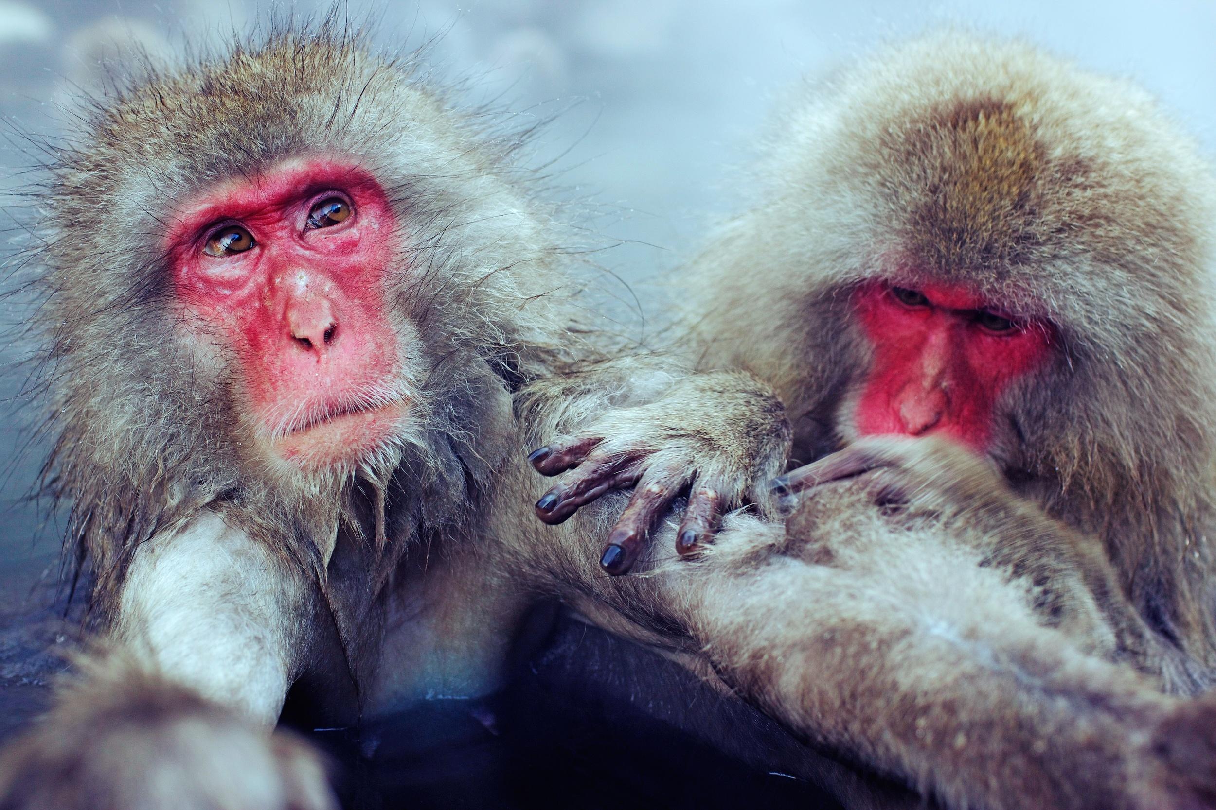 monkey12.jpg