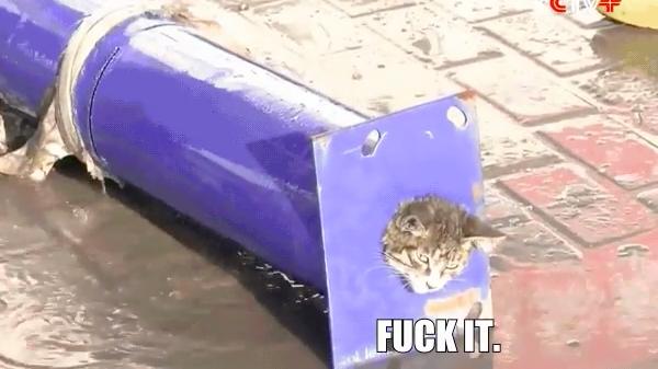 cat stuck in pipe