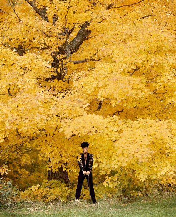 prince in autumn leaves of course!