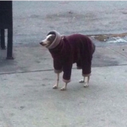 dogs in jackets
