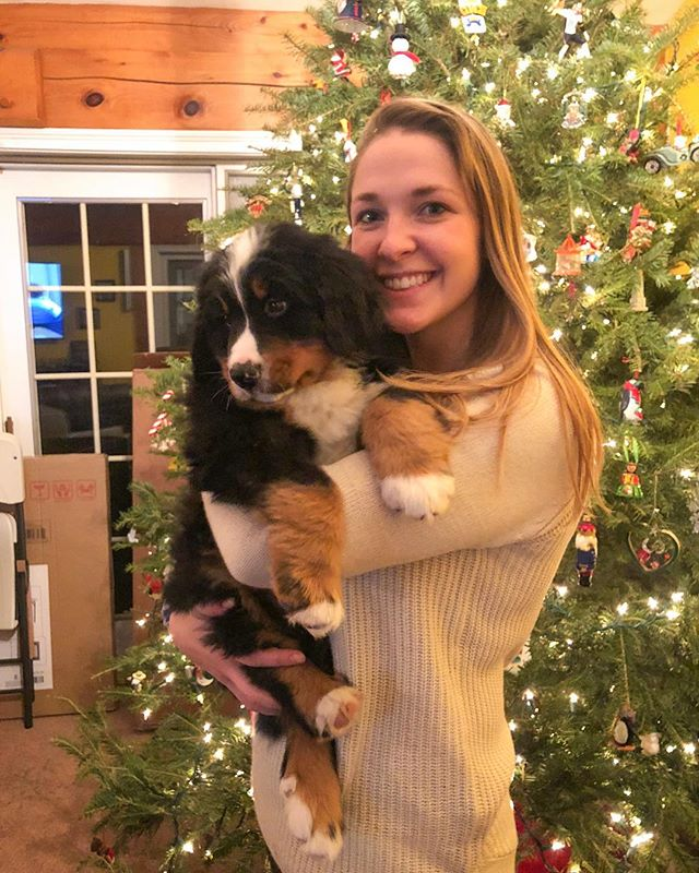 Merry Christmas🎄 featuring one of my two sweet boys🐶 @pcl18398