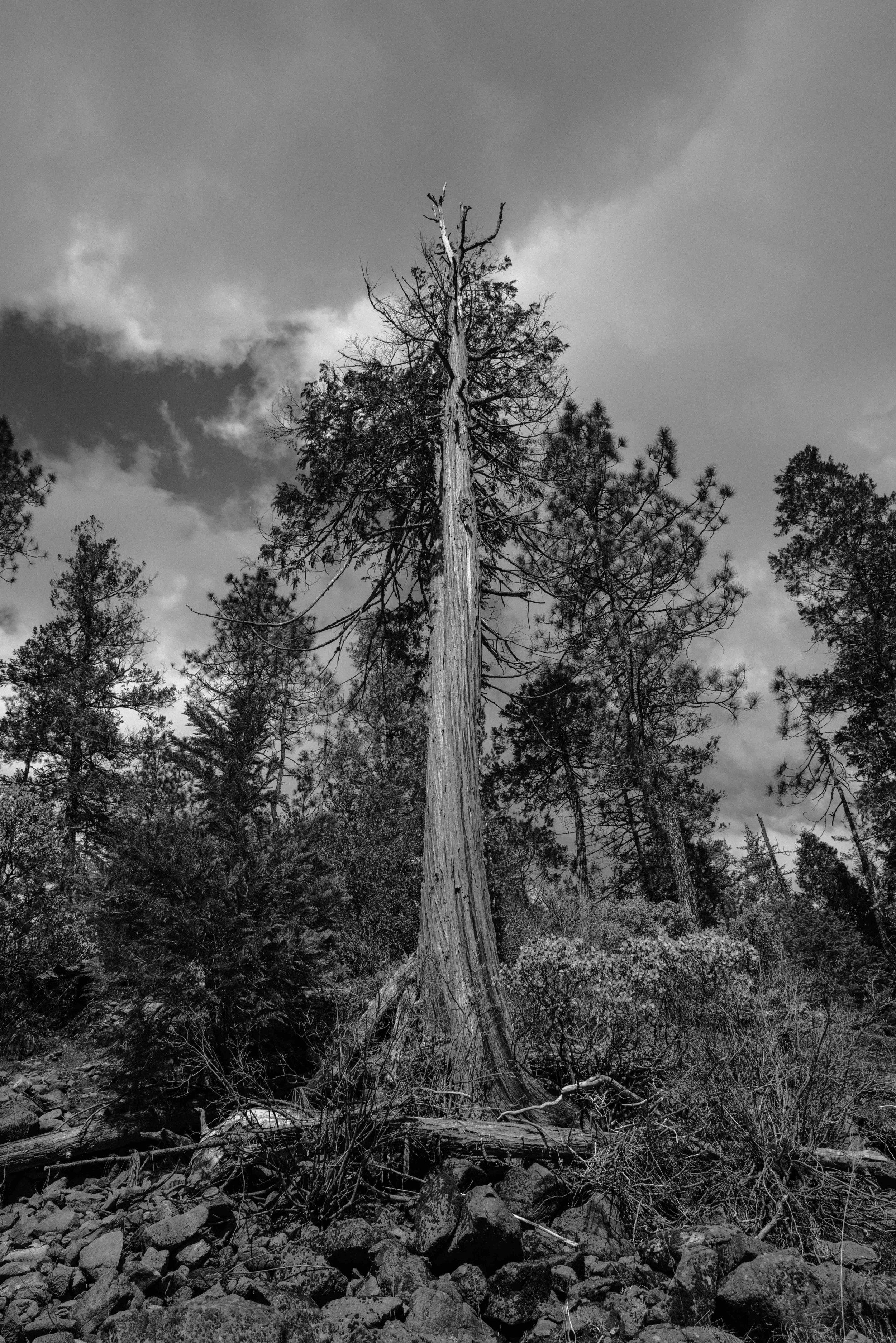 josue-rivas-culture-crush-nature-treet.jpg