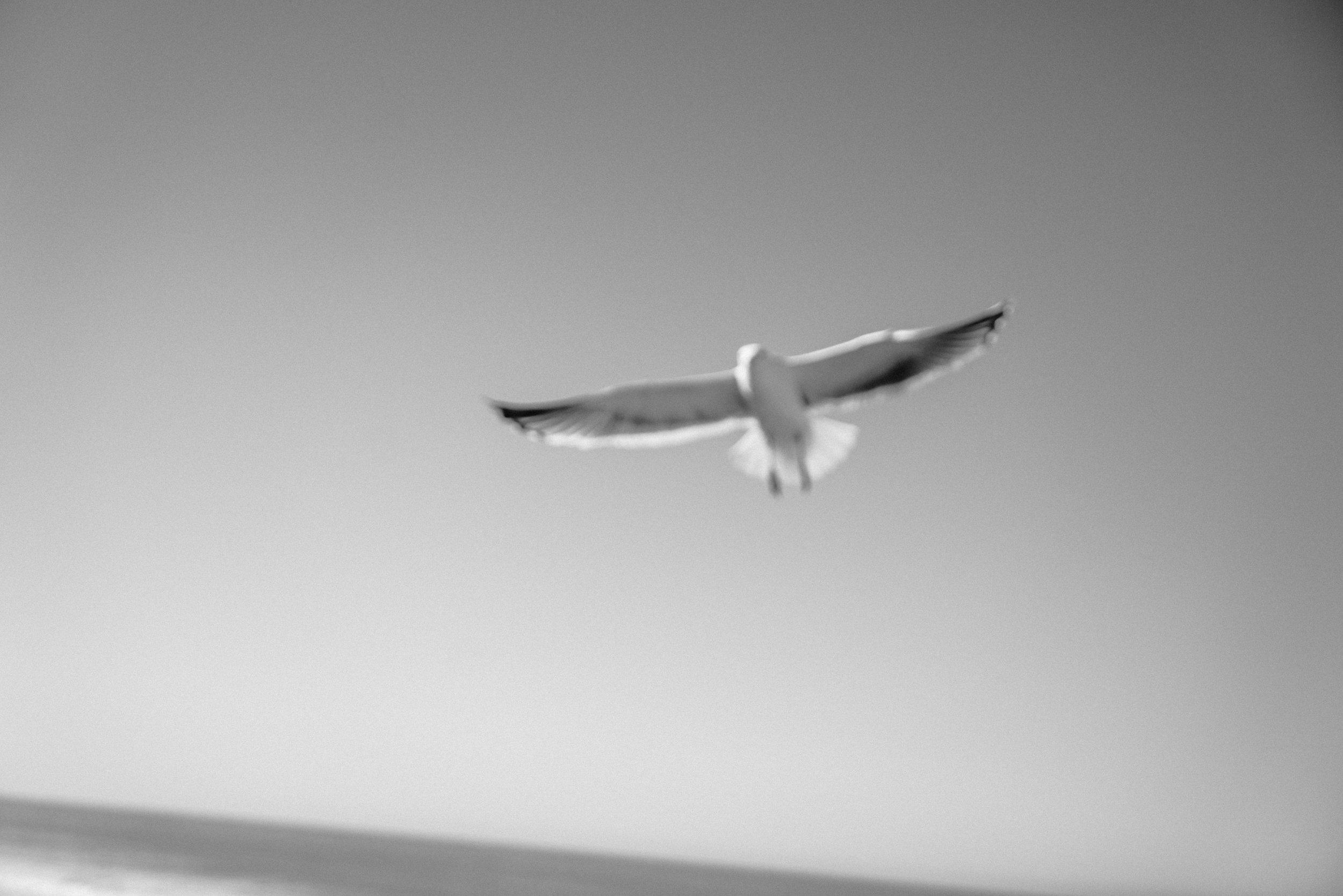 josue-rivas-culture-crush-seagull-pacific-northwest.jpg