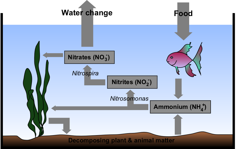 Nitrate cycle